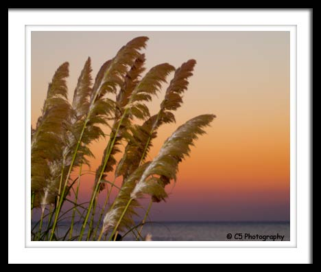 Photograph of grass during a sunrise on the beach