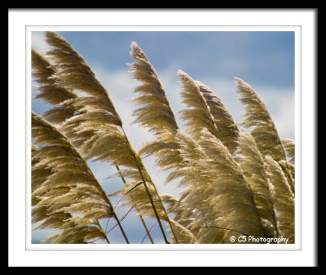Photograph of grass blowing in the wind on the beach