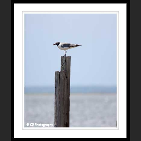 Seagull on a post in the ocean