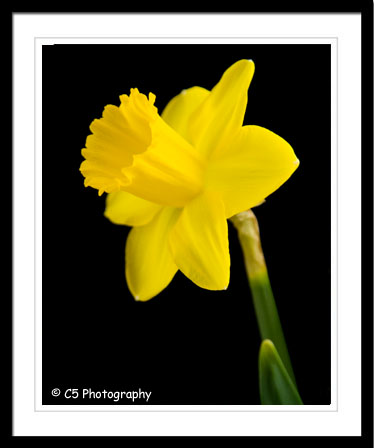 C5 Photography - Flower 044h
