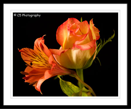 C5 Photography - Yellow & Orange Rose Flower Photographs