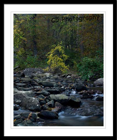 C5 Photography - New River Gorge, WVa 002