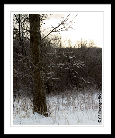 C5 Photography - Snowy/Wintery