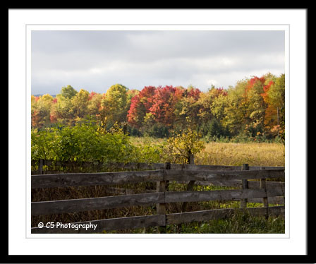 Fall Scenic 023c - by C5 Photography