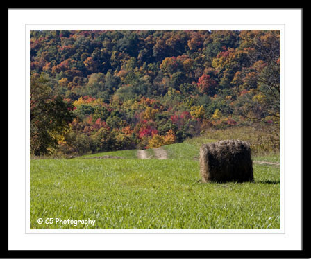 C5 Photography - Rural Autumn Scenic 023e