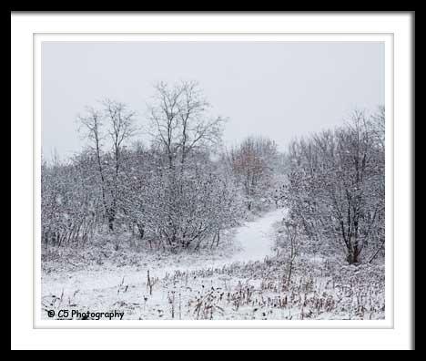 C5 Photography - Scenic 026